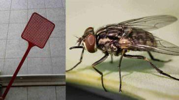 3 receitas caseiras para eliminar moscas dicas online - Eliminar moscas en casa ...