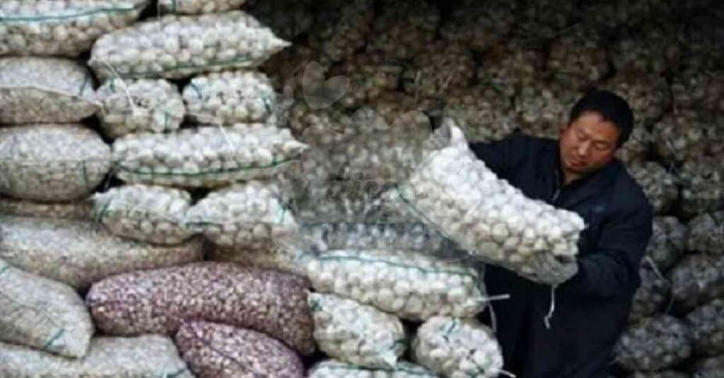 Resultado de imagem para alho chines
