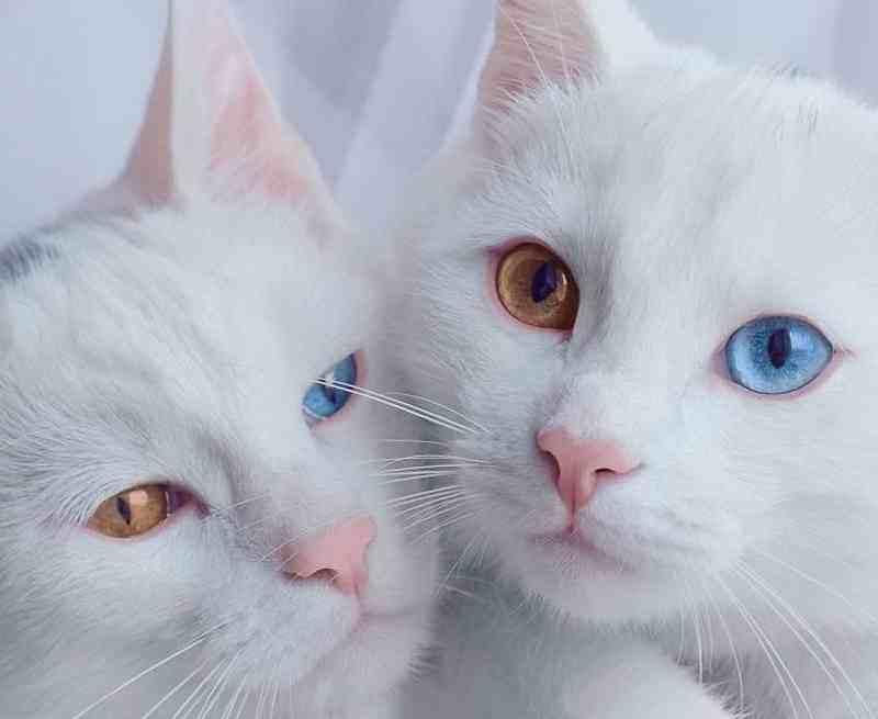 gatos10_dicas_online