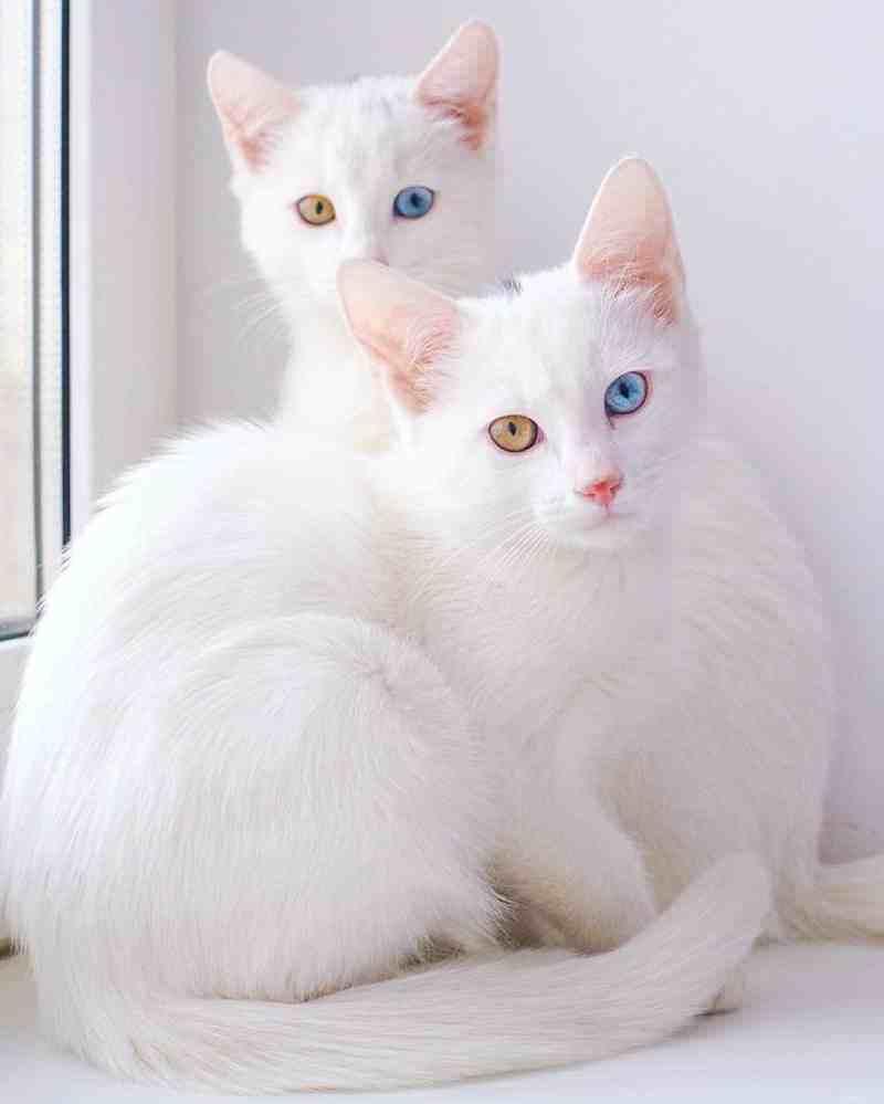 gatos11_dicas_online