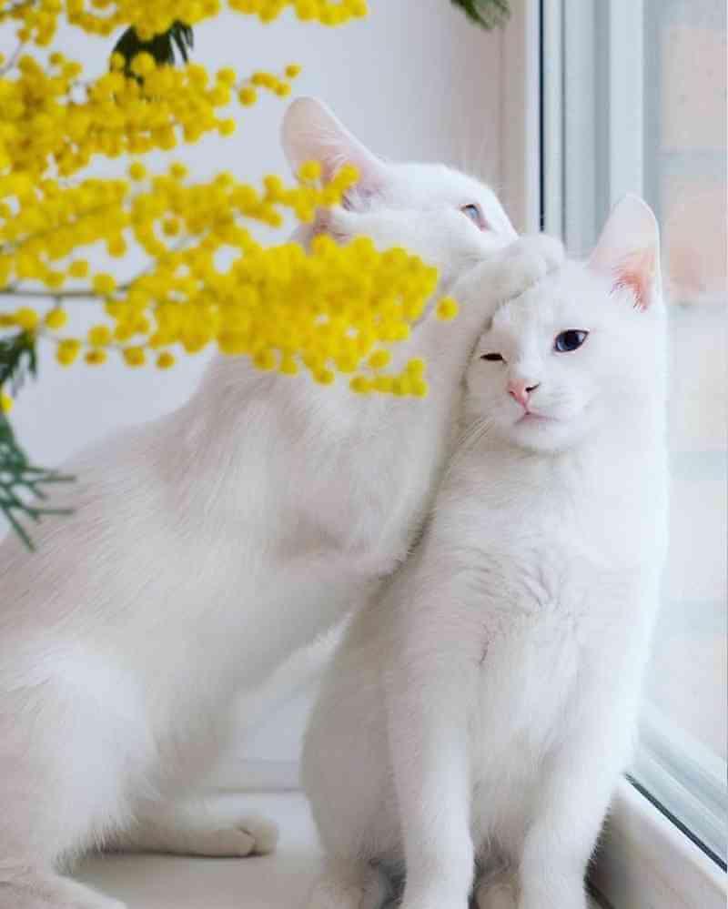 gatos12_dicas_online