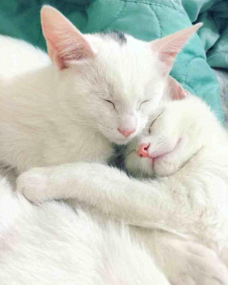 gatos2_dicas_online