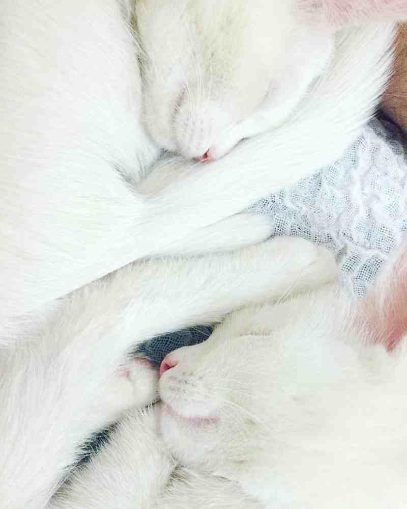 gatos3_dicas_online