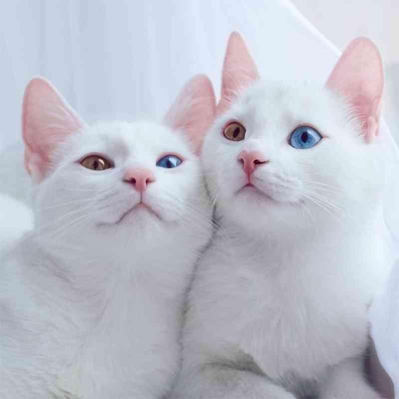gatos4_dicas_online