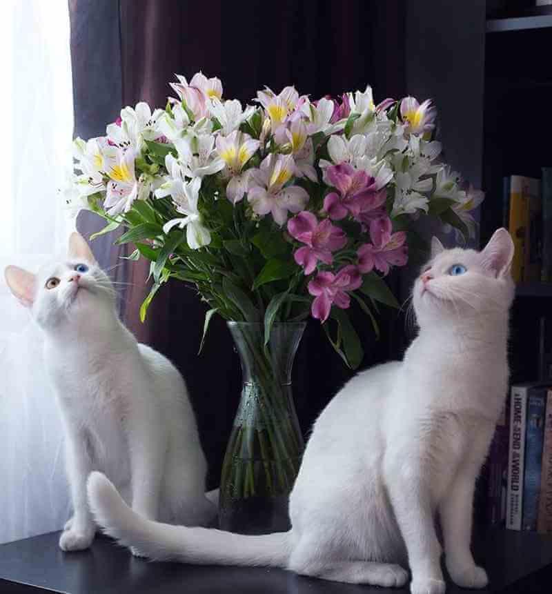 gatos5_dicas_online
