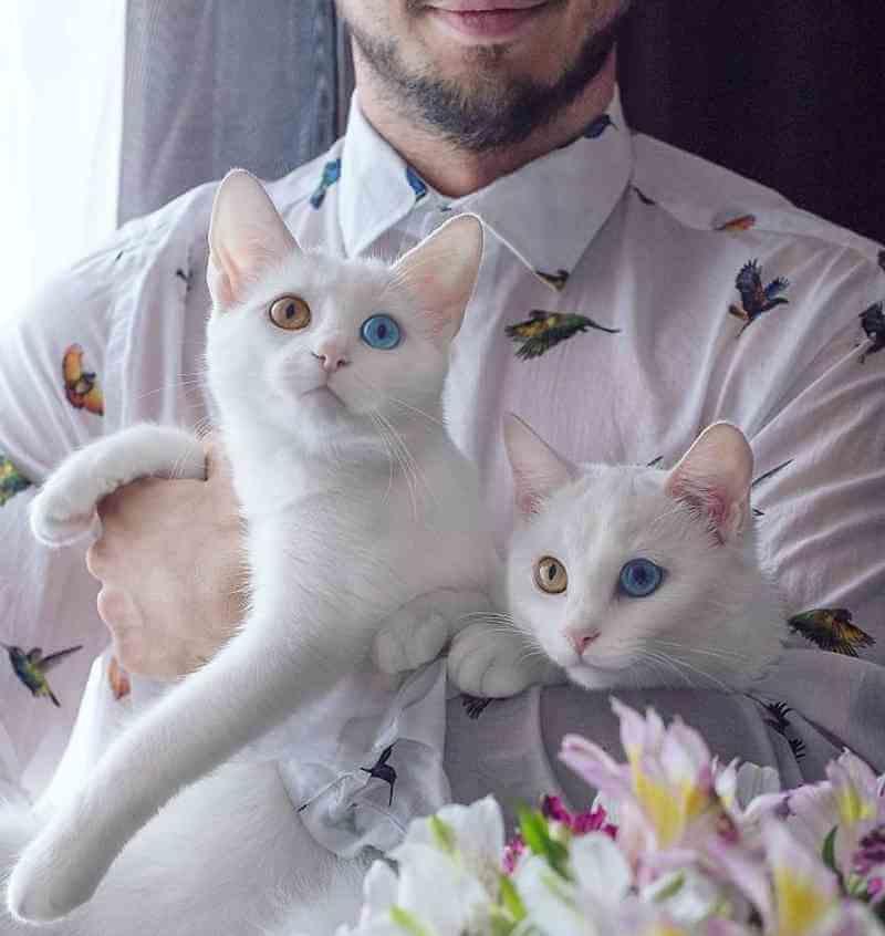 gatos6_dicas_online