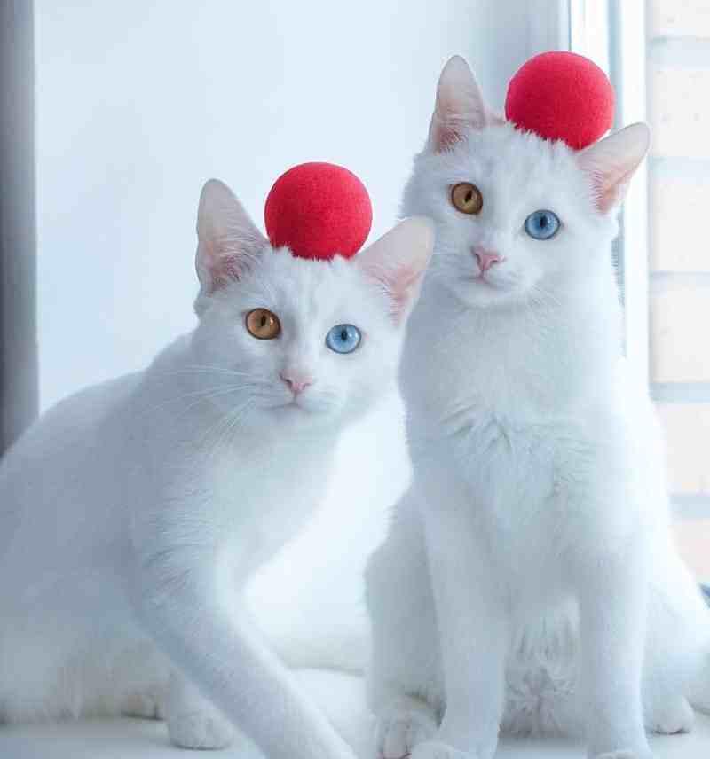 gatos7_dicas_online