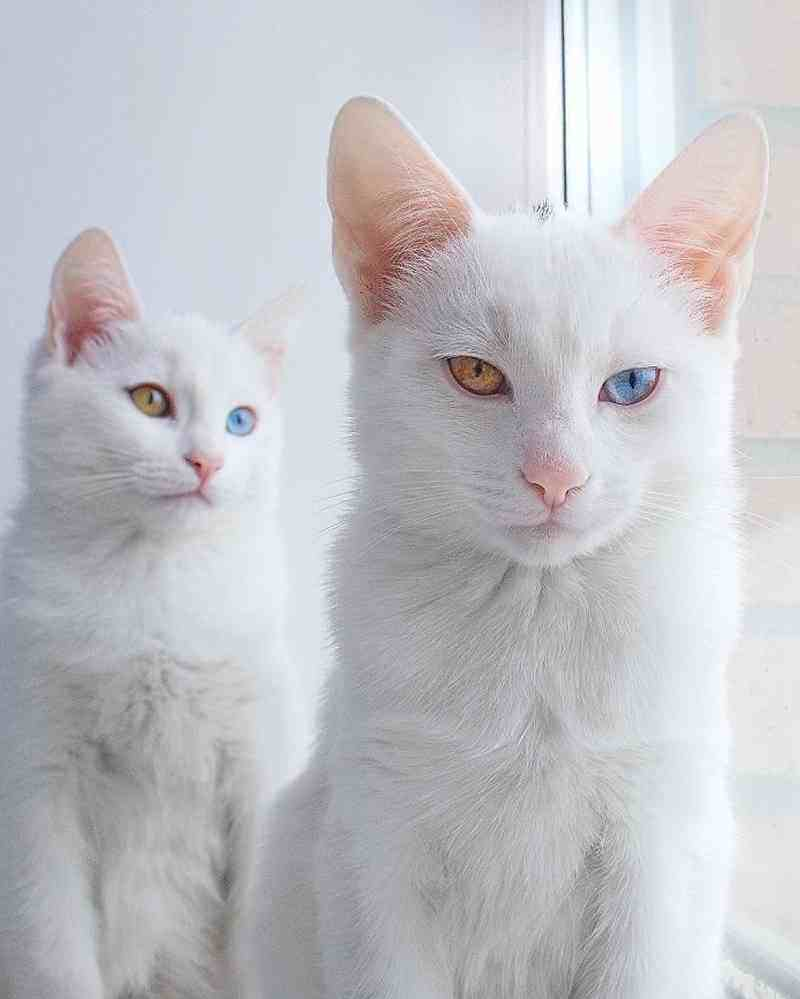 gatos8_dicas_online