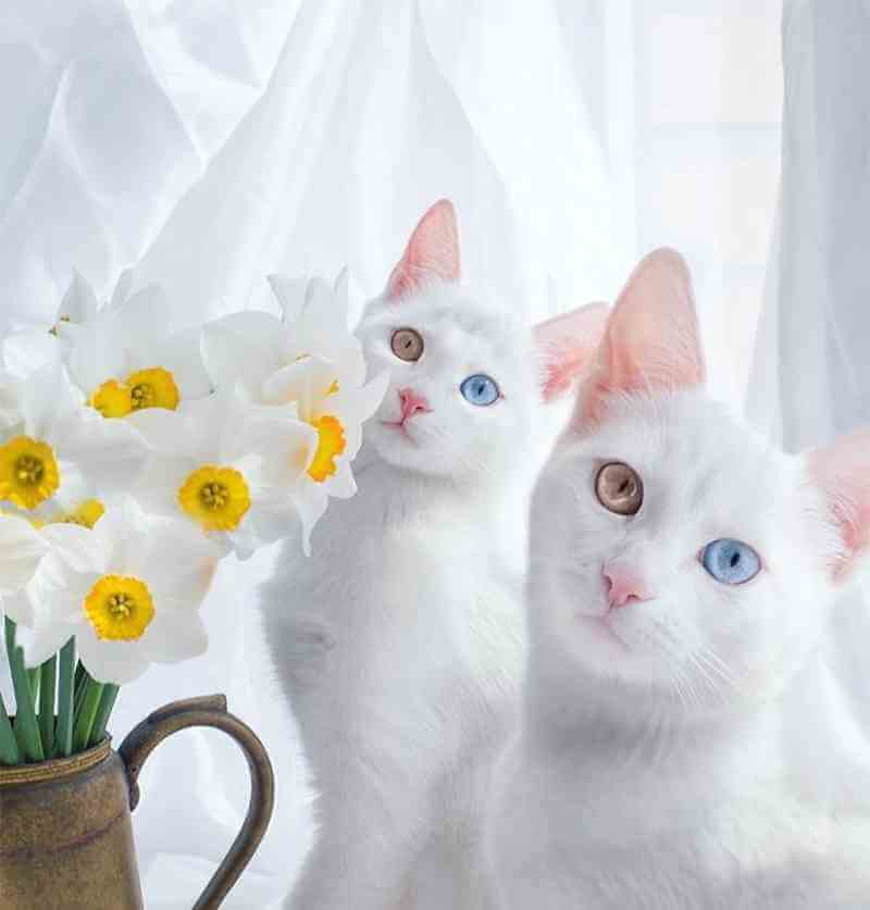gatos9_dicas_online