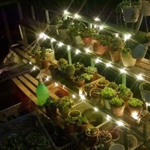 luce nel giardino interno