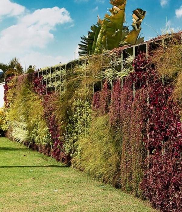 modelo jardim vertical muro