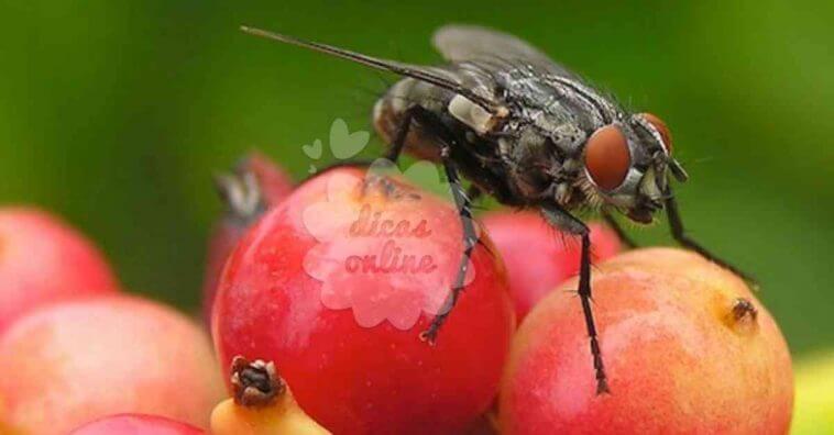 3 inseticidas naturais para eliminar moscas de sua casa - Eliminar moscas en casa ...