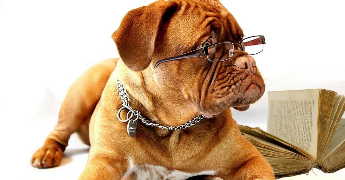 Resultado de imagem para Oculos limpos fotos