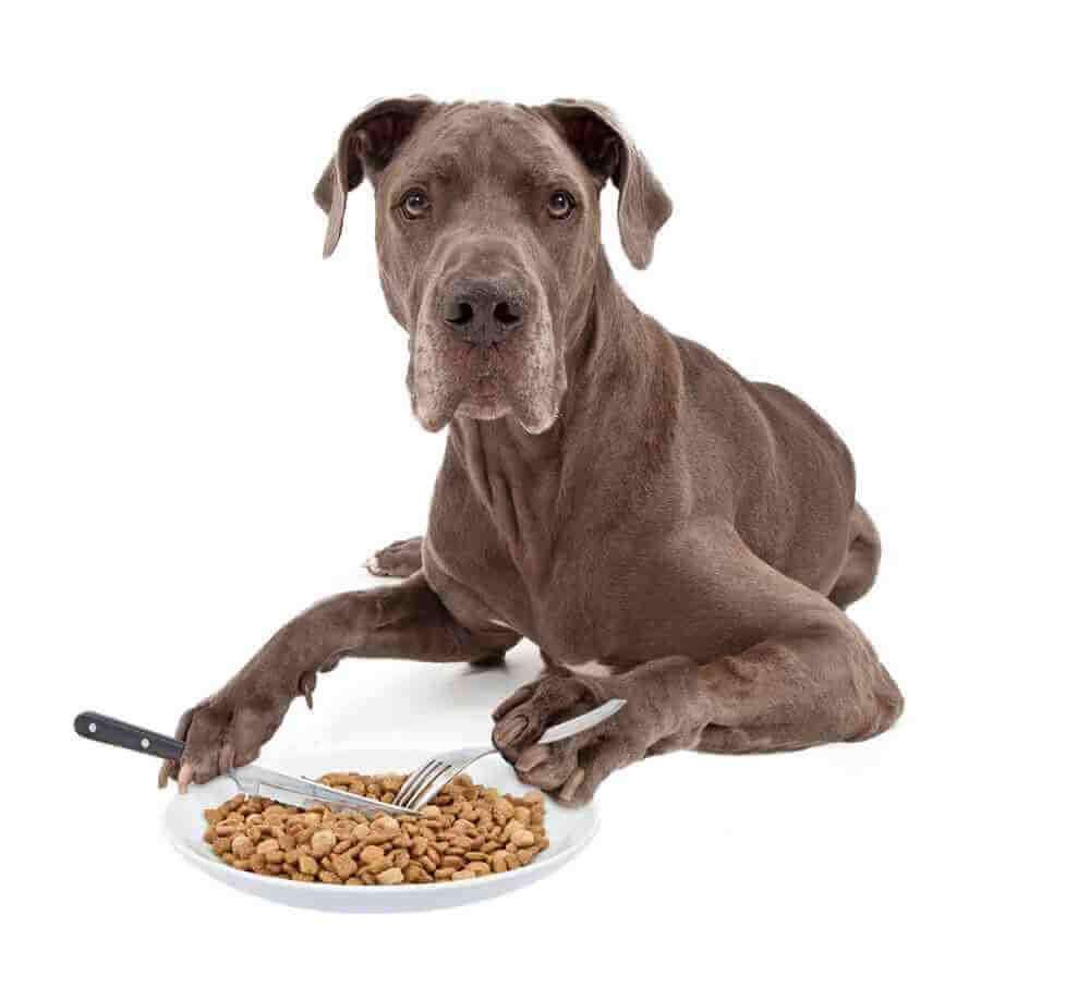 quanta-comida-dar-cachorro-cao-pet-racao-4