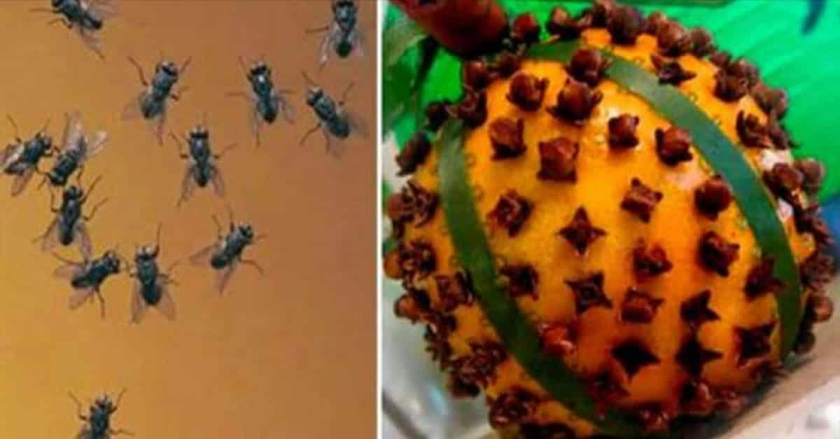 3 receitas caseiras para eliminar moscas - Eliminar moscas en casa ...